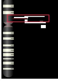 chromesome